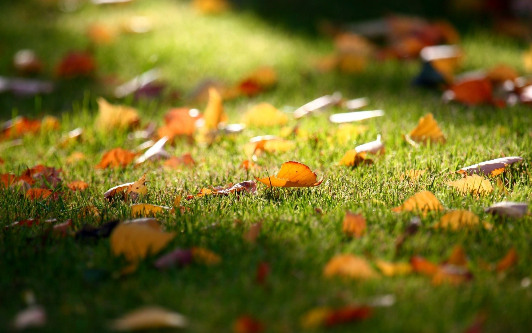 fall leaves in grass