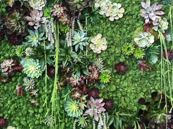Green Industry Women Biophilia green wall